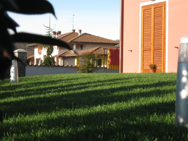 Clicca sulle immagini per ingrandirle for Prato zolle